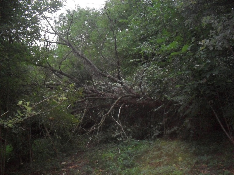 alberi abbattuti dai temporali Sdc11216