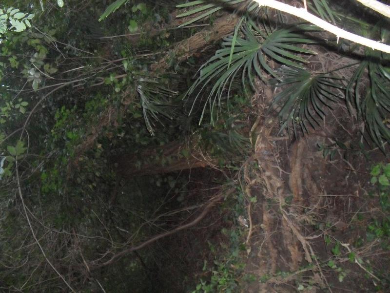alberi abbattuti dai temporali Sdc11217
