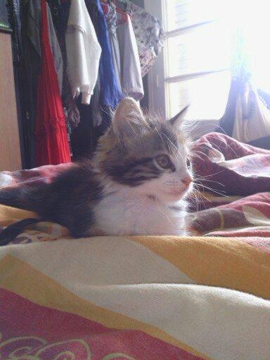 Mon nouveau bébé 13487511