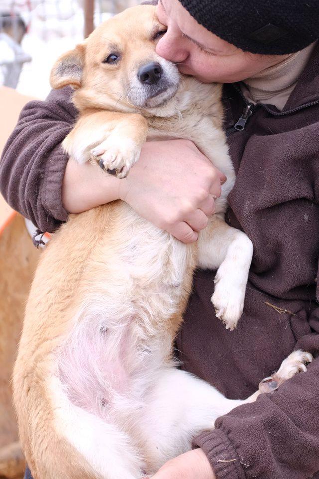 PRALINE, femelle croisée, née environ février 2015 - Refuge Alina et Anda - Adoptée par Guillaume (depart84) 50089410