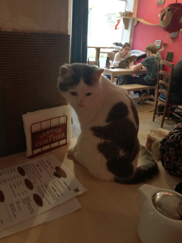 Ouaness, jeune chat gris et blanc né en novembre 2017 Img_2018