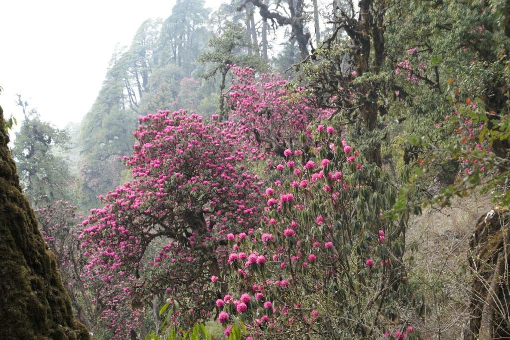 Népal - Mars avril 2019 00510