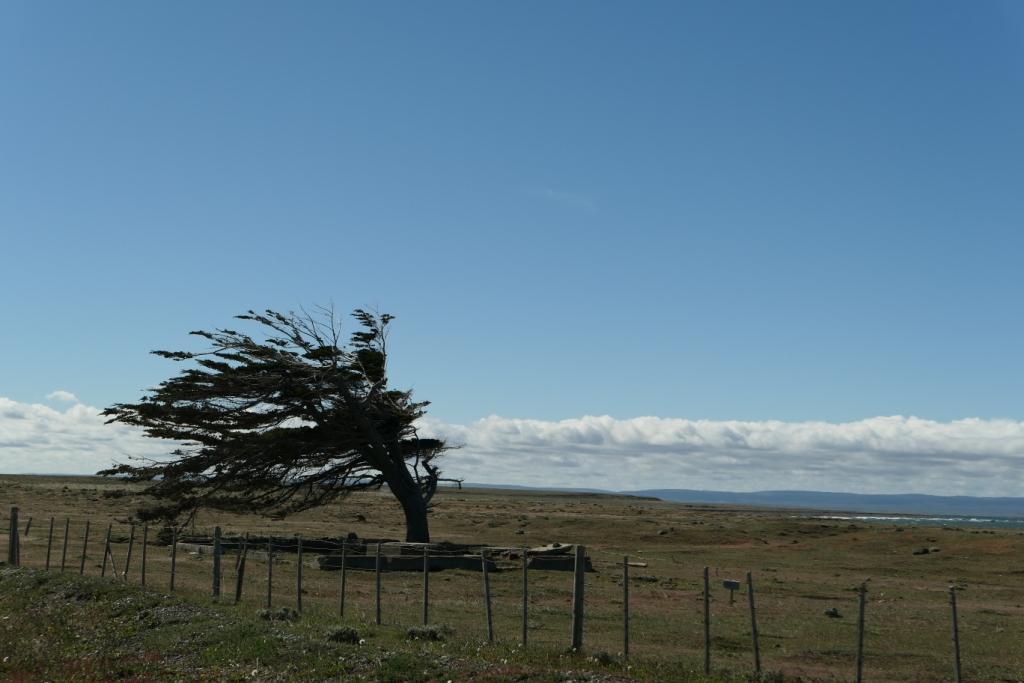 Flore, faune et paysages de Patagonie australe - Page 2 0314