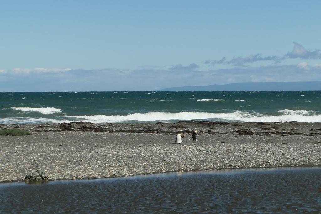 Flore, faune et paysages de Patagonie australe - Page 2 0414