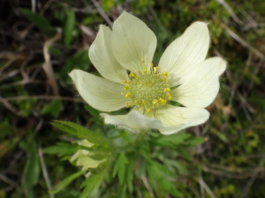 Flore, faune et paysages de Patagonie australe 05-ane10