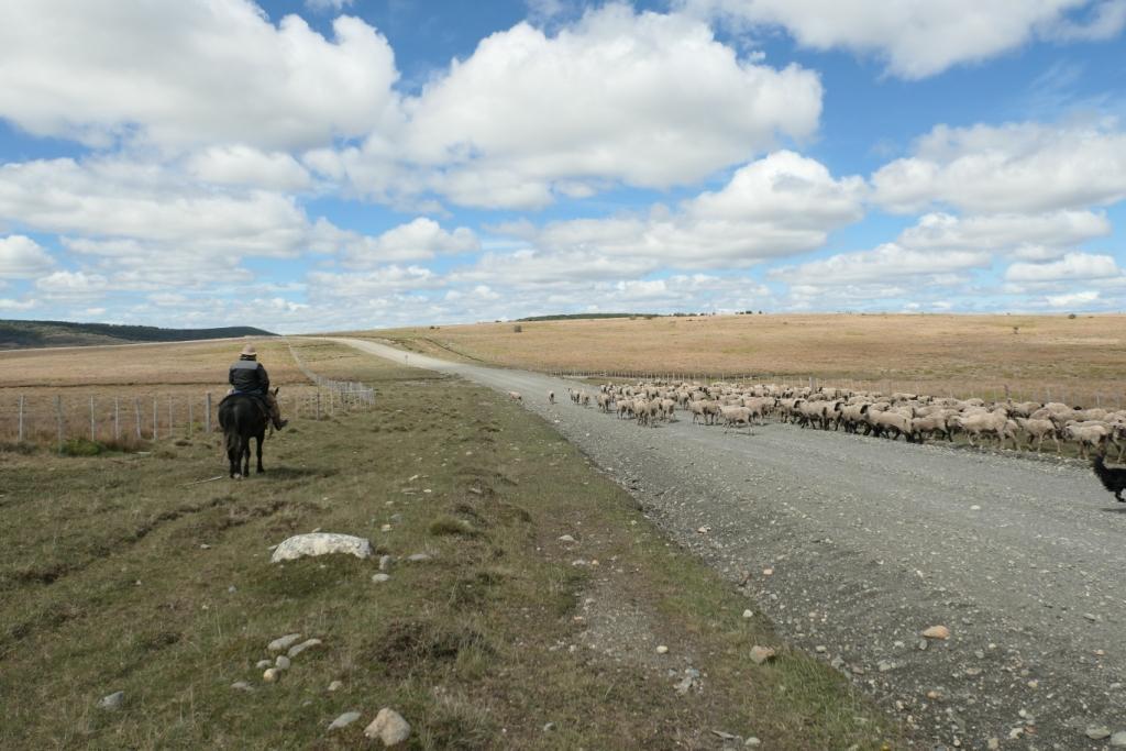 Flore, faune et paysages de Patagonie australe - Page 2 0513