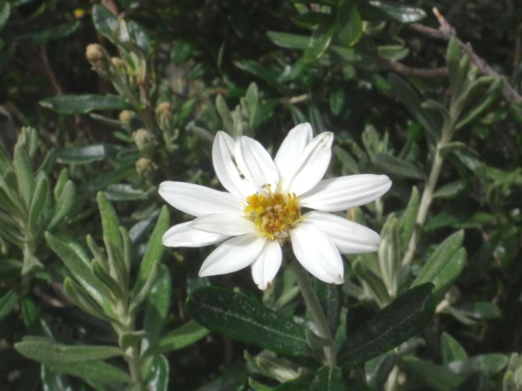 Flore, faune et paysages de Patagonie australe 06-chi10