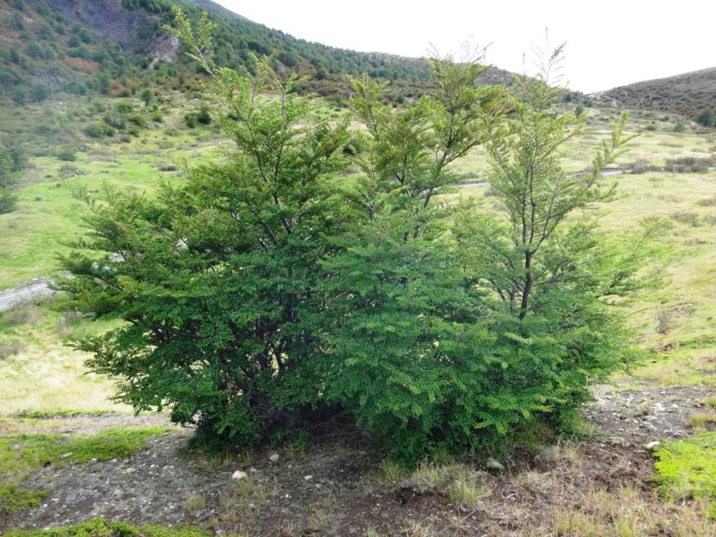 Flore, faune et paysages de Patagonie australe - Page 2 06-not11