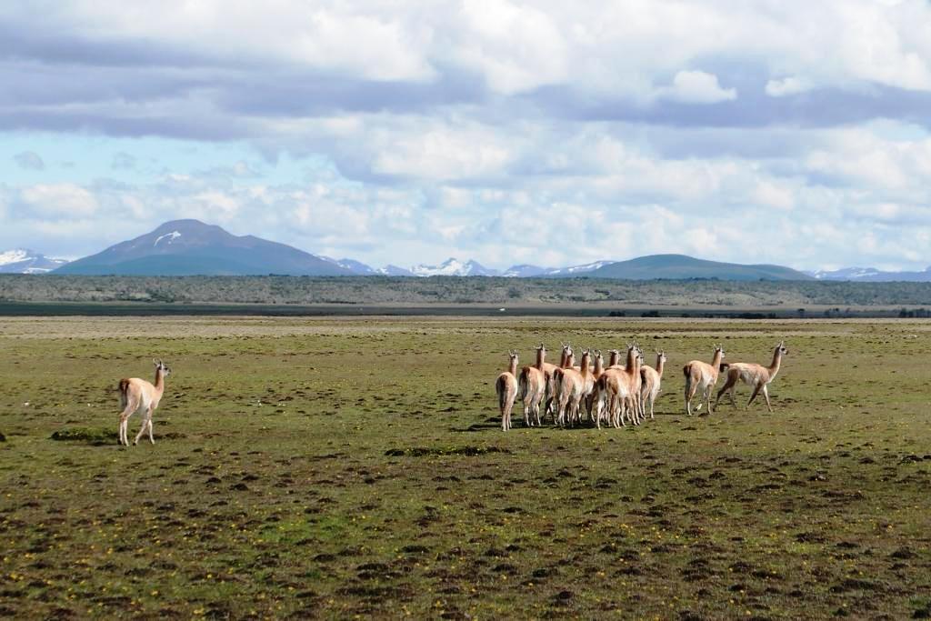 Flore, faune et paysages de Patagonie australe - Page 2 0712