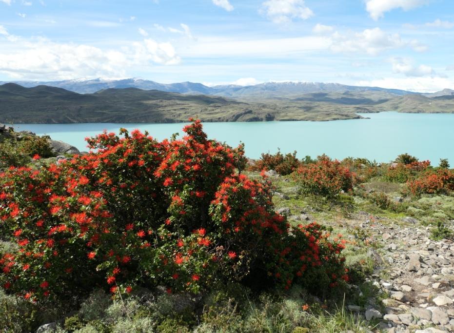 Flore, faune et paysages de Patagonie australe 08-emb10