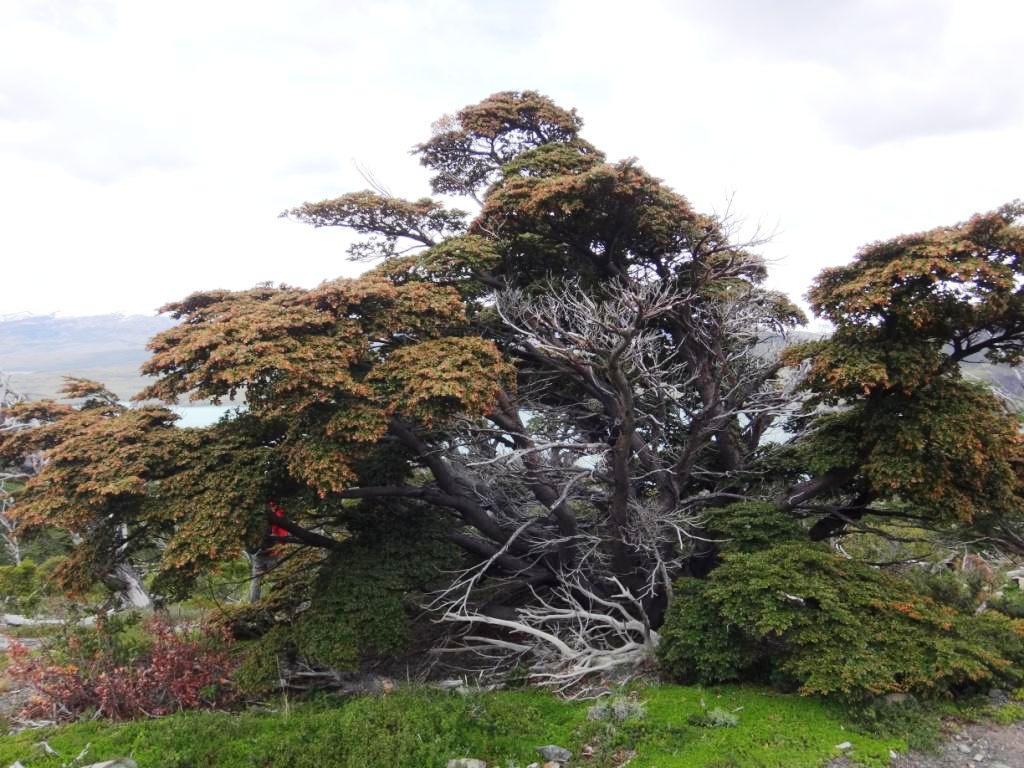 Flore, faune et paysages de Patagonie australe - Page 2 08-not10