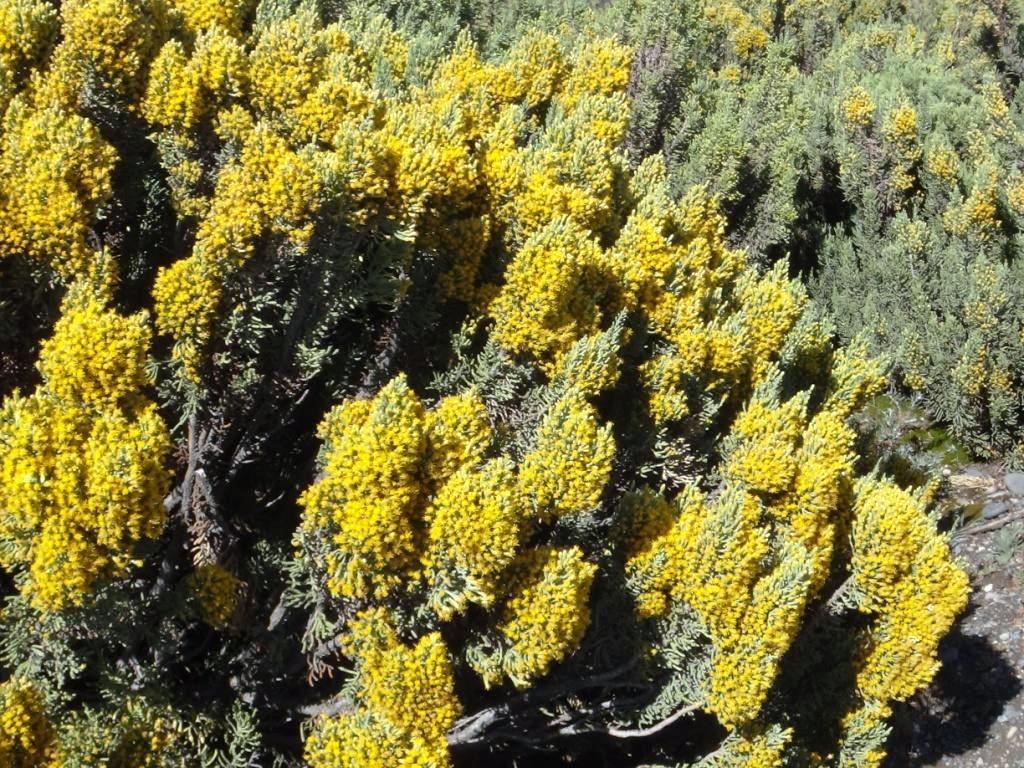 Flore, faune et paysages de Patagonie australe - Page 2 11-lep10