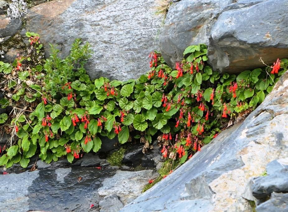 Flore, faune et paysages de Patagonie australe 11-our10
