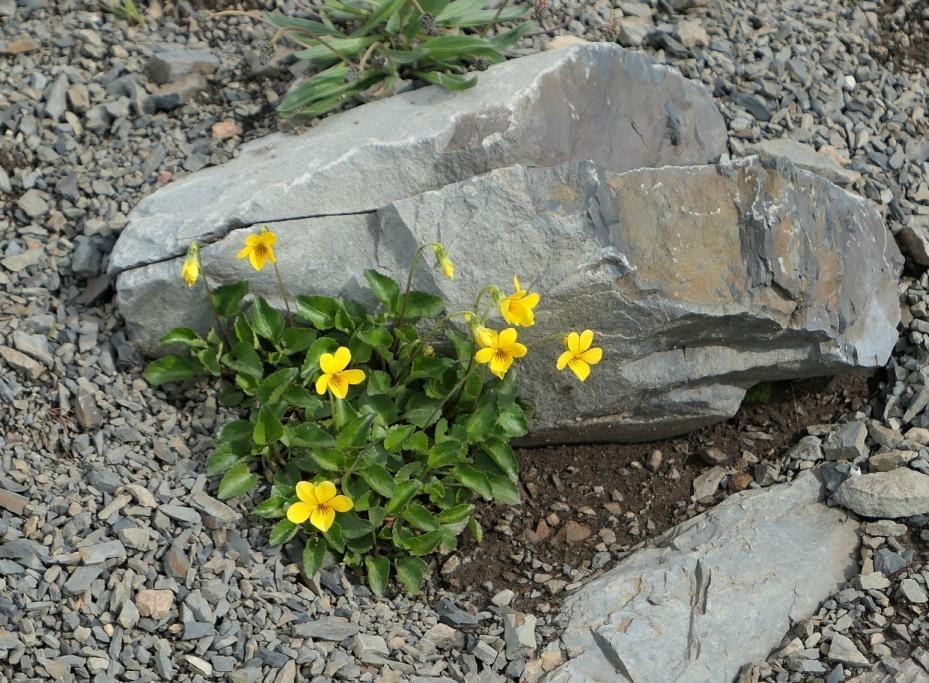 Flore, faune et paysages de Patagonie australe 12-vio10