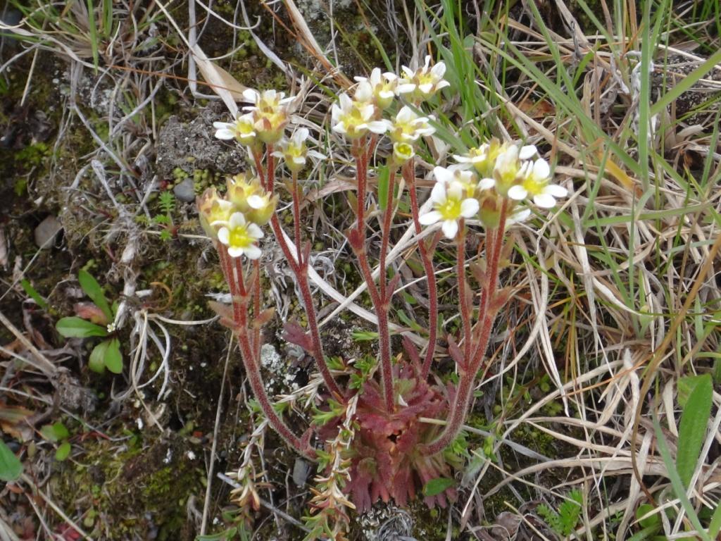 Flore, faune et paysages de Patagonie australe 13-sax10