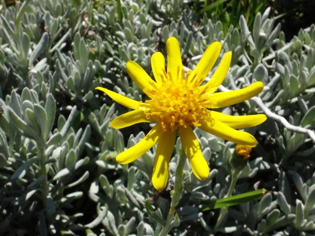 Flore, faune et paysages de Patagonie australe - Page 2 15-sen10