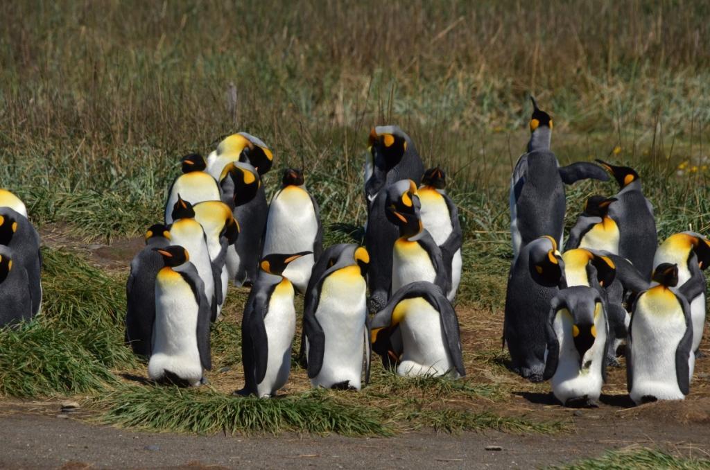 Flore, faune et paysages de Patagonie australe - Page 2 19-apt10