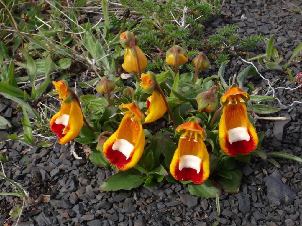 Flore, faune et paysages de Patagonie australe 20-cal10