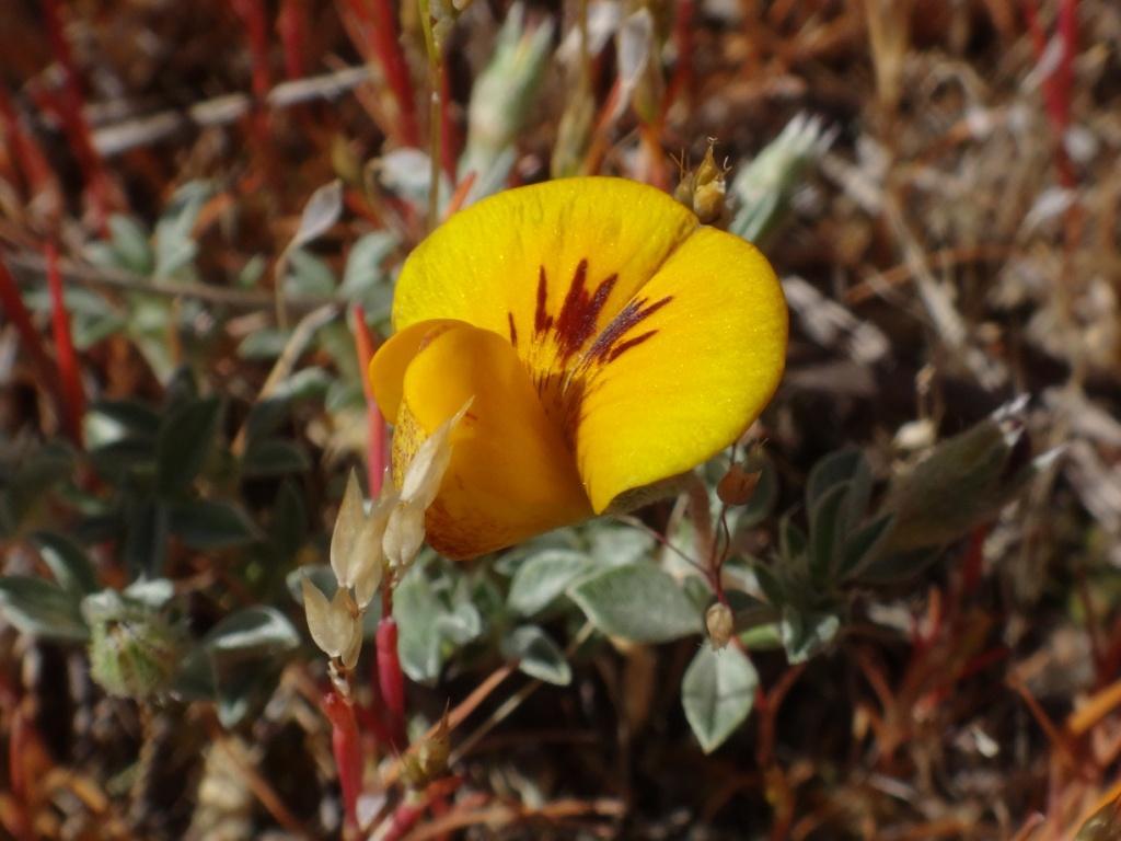 Flore, faune et paysages de Patagonie australe 21-ade10