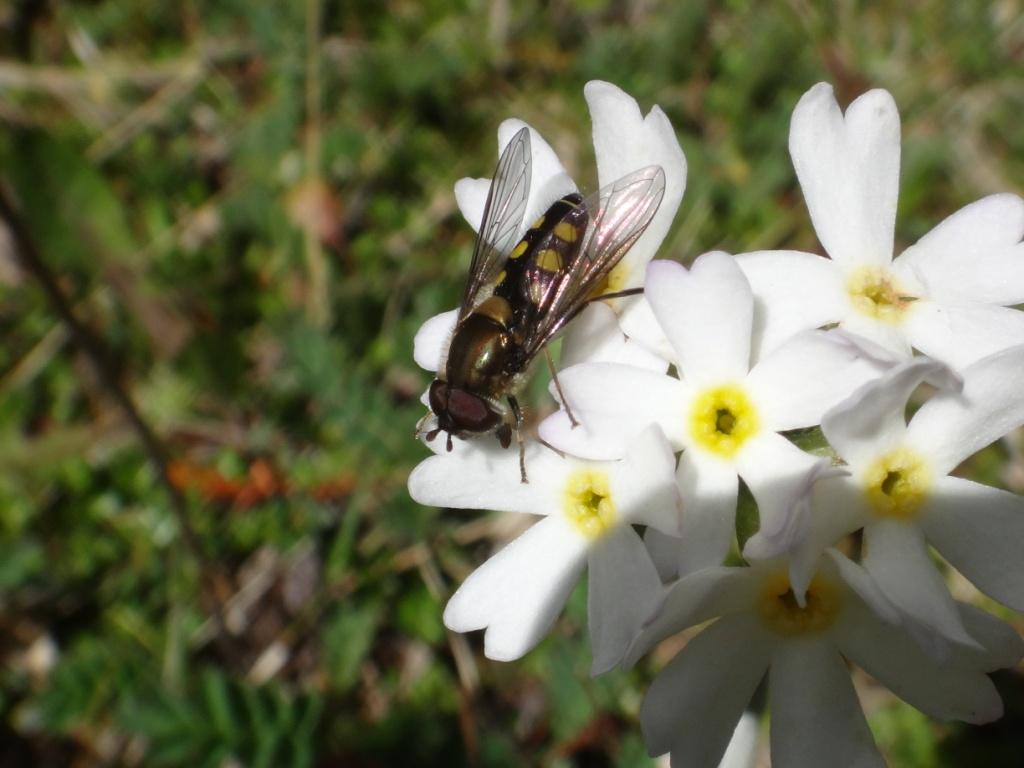 Flore, faune et paysages de Patagonie australe - Page 2 2111