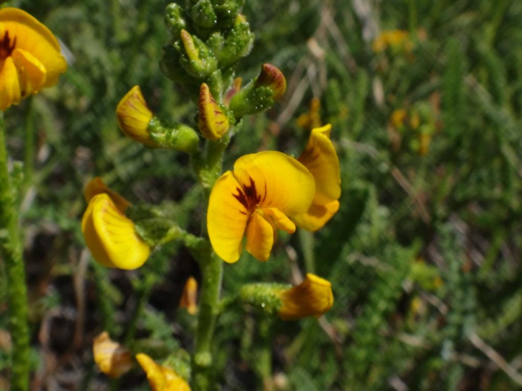 Flore, faune et paysages de Patagonie australe 22-ade10