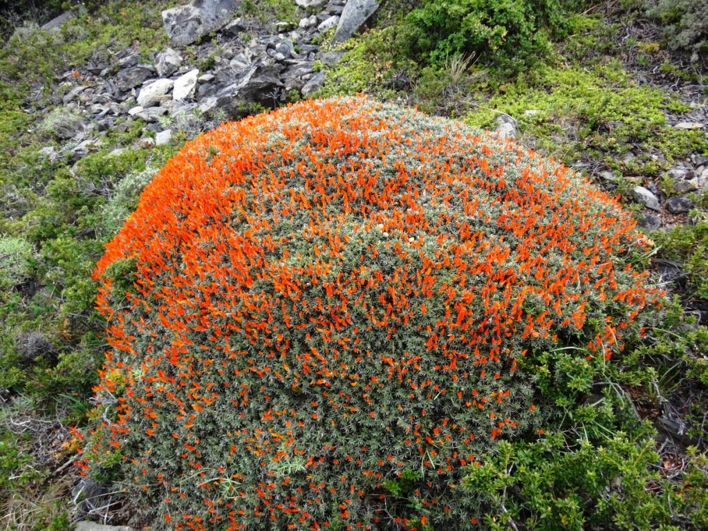 Flore, faune et paysages de Patagonie australe 23-ana10