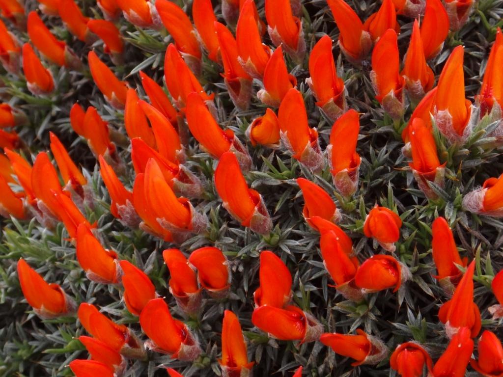 Flore, faune et paysages de Patagonie australe 24-ana10