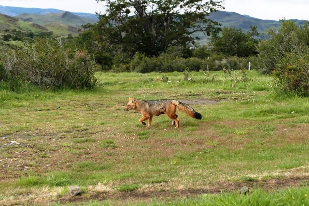 Flore, faune et paysages de Patagonie australe 29-lyc11