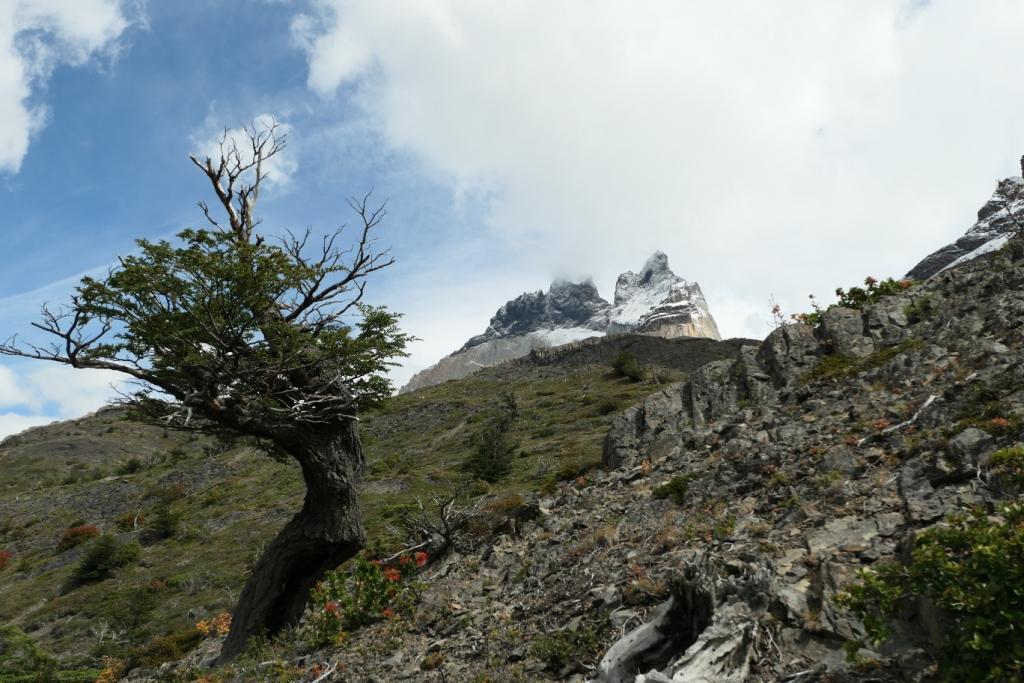 Flore, faune et paysages de Patagonie australe 3211