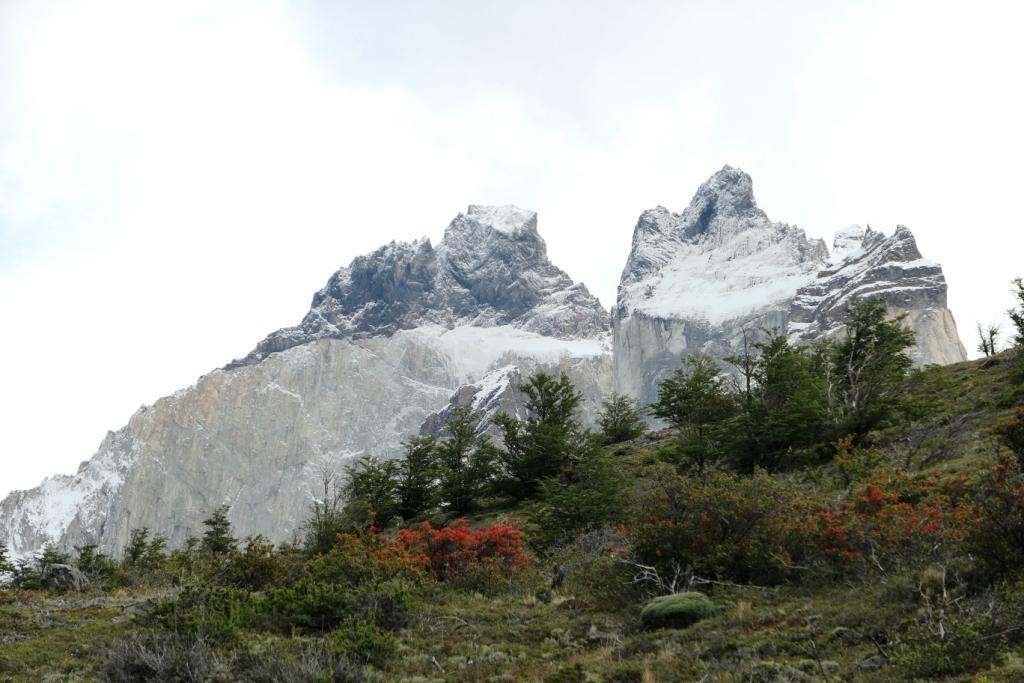 Flore, faune et paysages de Patagonie australe 3311