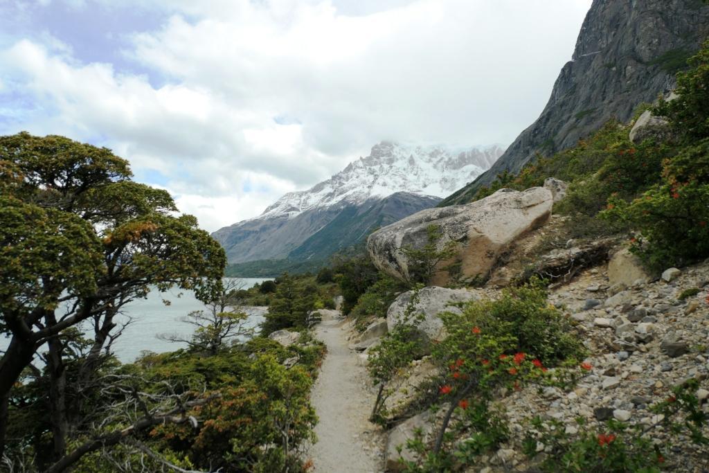 Flore, faune et paysages de Patagonie australe 3411