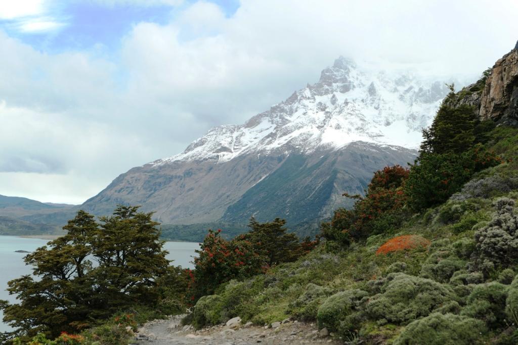 Flore, faune et paysages de Patagonie australe 3511