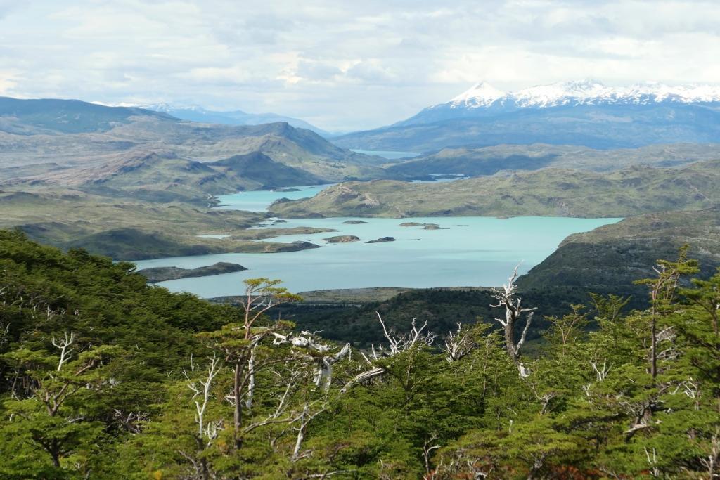 Flore, faune et paysages de Patagonie australe 3710