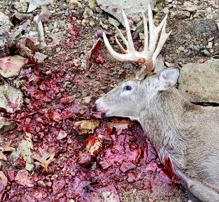 Late season muzzleloader buck Buck10