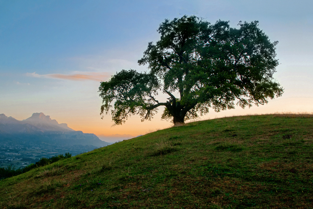 Le chêne de Venon 1000_v11