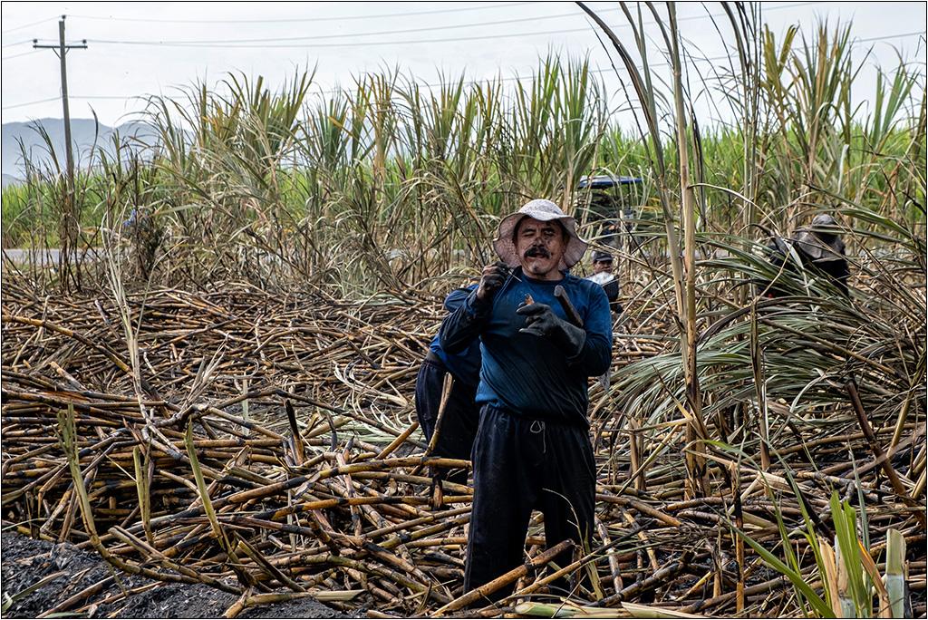 [Petite_série] Dans les champs de cannes à sucre Dscf5111