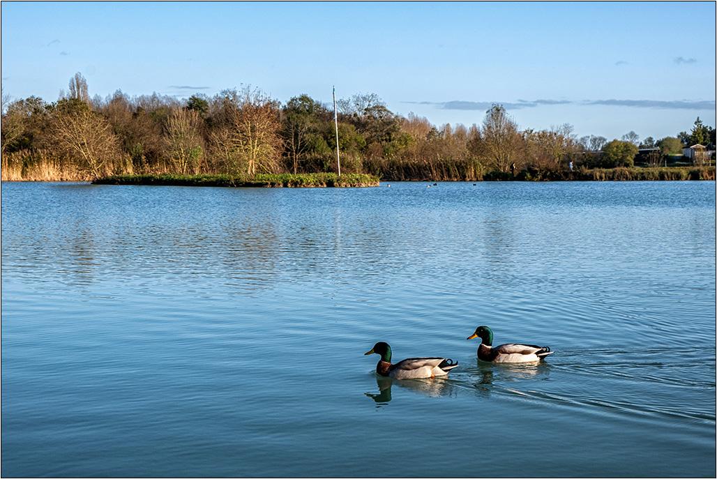 [Paysages] Les canards :-) Dscf8119