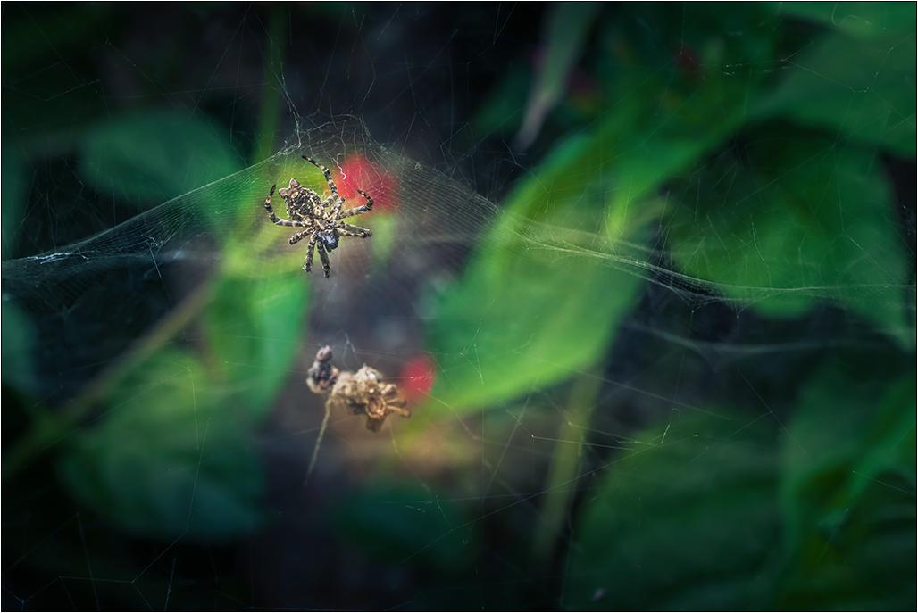 [Macro_et_Proxy] L'araignée Img_4118
