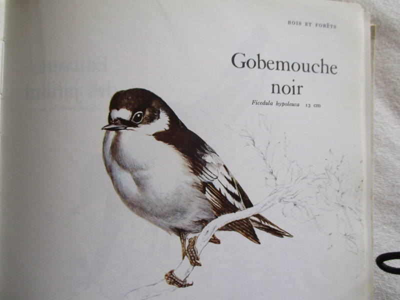 sauvetage oiseau de la nature Img_1234