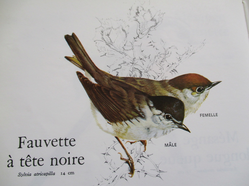 sauvetage oiseau de la nature Img_1235
