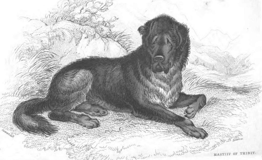 Ces chiens qui ont perdu leurs colliers. - Archibal Moloss11
