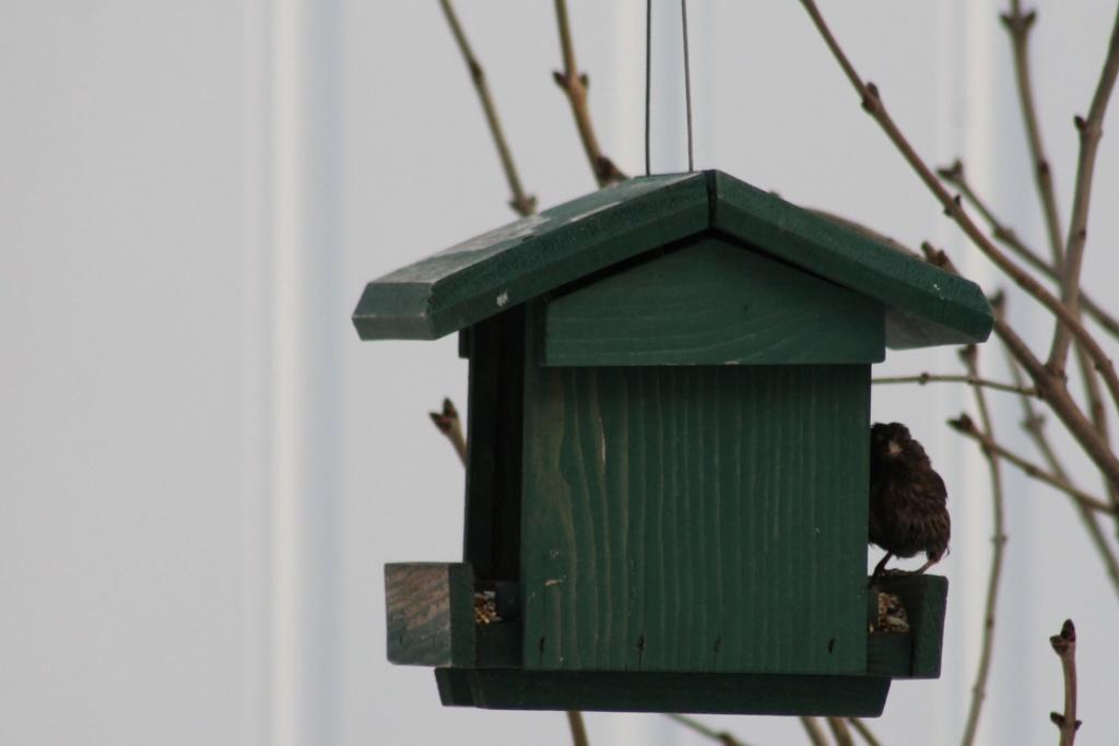 Oiseau mystère à la mangeoire Image210