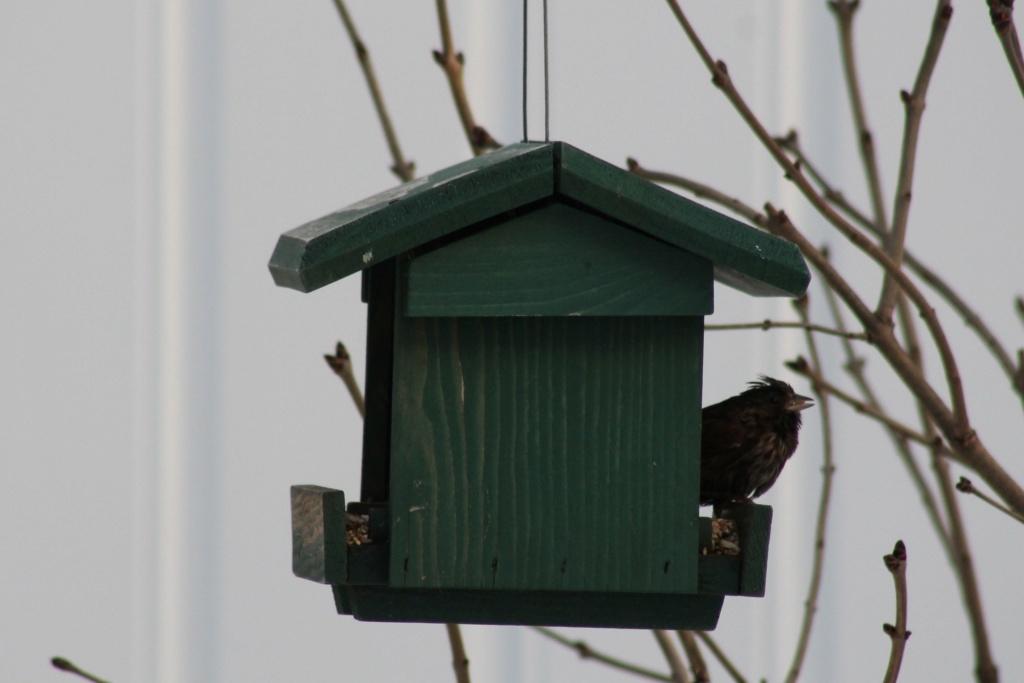 Oiseau mystère à la mangeoire Image310