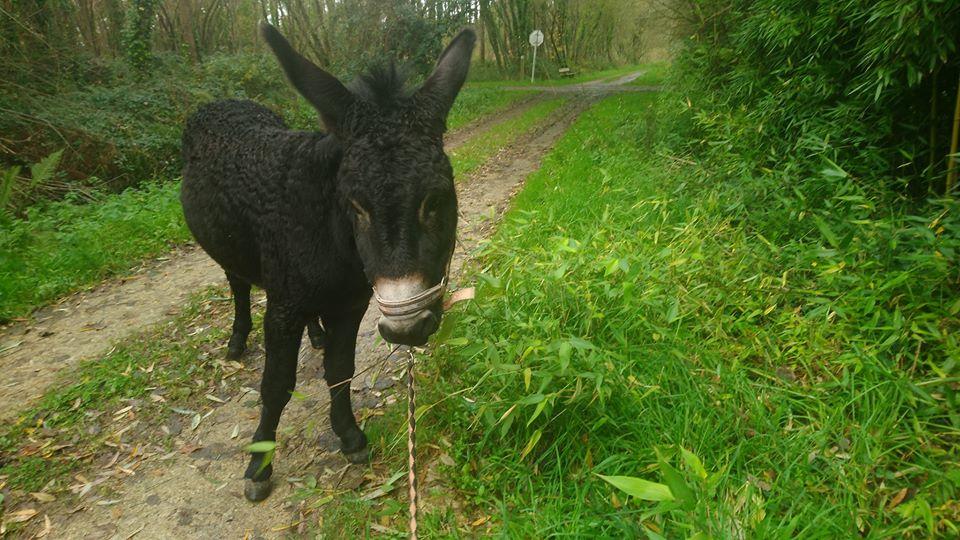 PACO - âne mâle noir - 5 ans 74692410