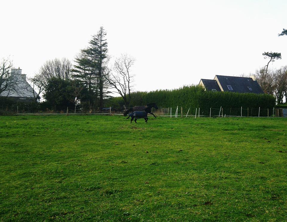 PACO - âne mâle noir - 5 ans (réservé) 80438610