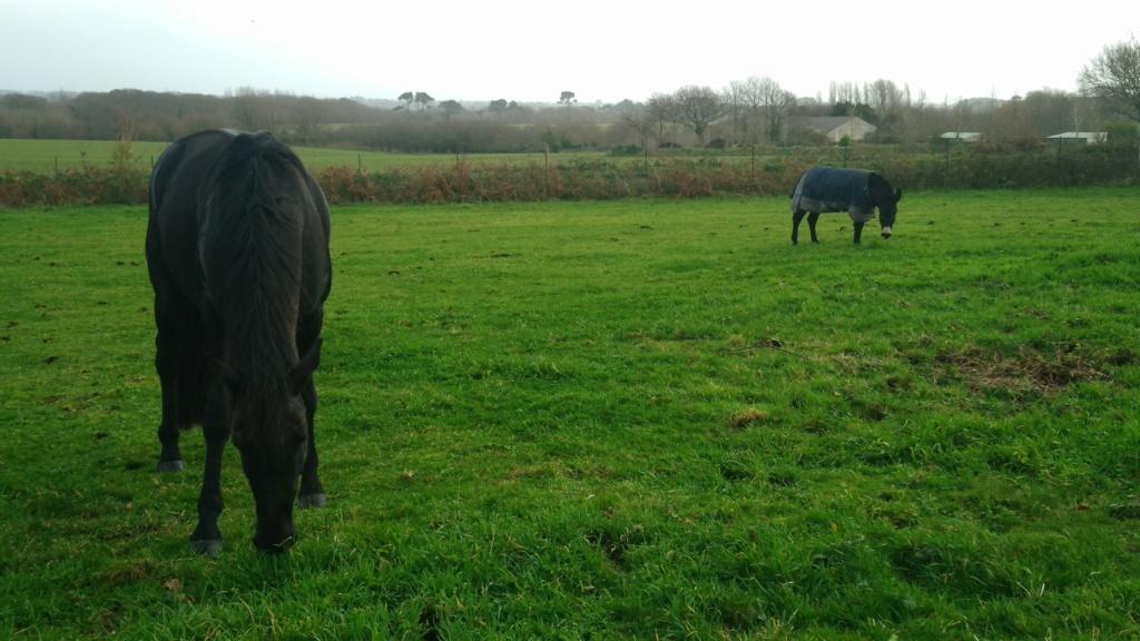 PACO - âne mâle noir - 5 ans (réservé) 80683510