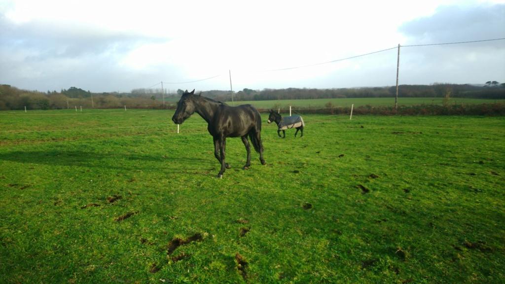 PACO - âne mâle noir - 5 ans (réservé) 81175710