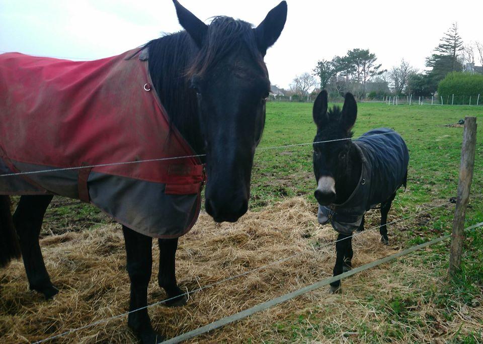 PACO - âne mâle noir - 5 ans (réservé) 81567210