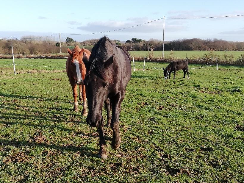 PACO - âne mâle noir - 5 ans (réservé) 81811210