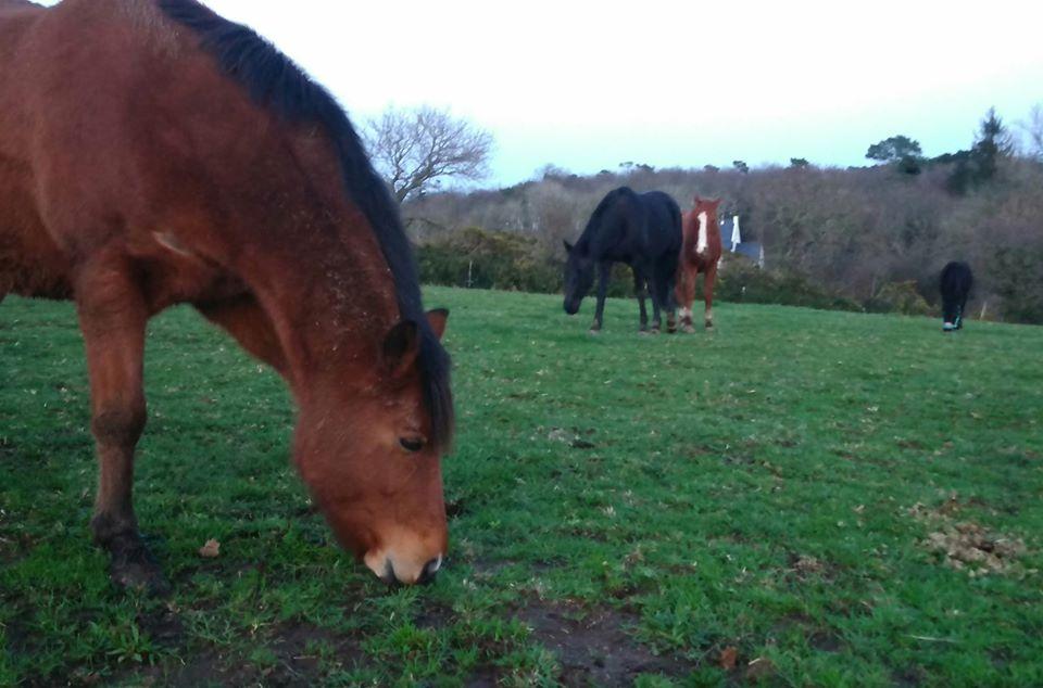 PACO - âne mâle noir - 5 ans (réservé) 81938010